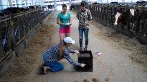 Виробнича практика - дослідження загальнозмішаного раціону корів