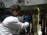 А. Степченко, магістр кафедри, проводить консервацію вим'я корів перед сухостоєм