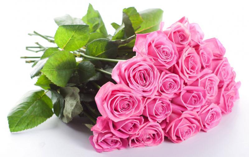 Гербер цветы фото